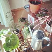 風水で運気アップ☆観葉植物タイプ別の効果と上手な取り入れ方まとめ