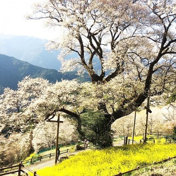 ひょうたん桜公園