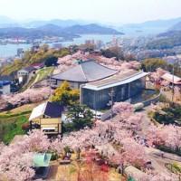 桜前線と一緒に旅してみませんか?桜の人気名所ご紹介♪【中国地方編】