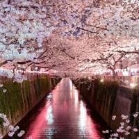 ロマンチックなデートに最適な東京都内の夜桜スポット5選♡