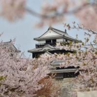 桜前線と一緒に旅してみませんか?桜の人気名所ご紹介♪【四国編】