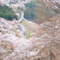 桜前線と一緒に旅してみませんか?桜の人気名所をご紹介♪【近畿地方】