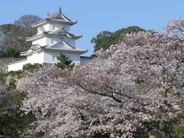 出典:http://www.hyogo-tourism.jp/hanadokoro/sakura/index.php?sakuraspot&act=detail&id=200272