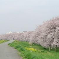 桜前線と一緒に旅してみませんか?桜の人気名所をご紹介♪【関東地方】