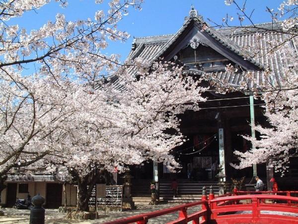 出典:http://sakura.nihon-kankou.or.jp/detail/view.php?id=S3001