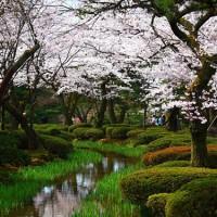 桜前線と一緒に旅してみませんか?桜の人気名所をご紹介♪【中部地方】