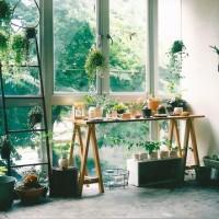 光と緑を同時に浴びる。窓際に作る、安らぎと癒しの空間。