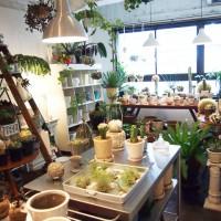 とっておきの観葉植物がみつかる!関西のボタニカルショップ5選