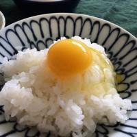 卵の旨みを堪能する。進化した卵かけご飯のアレンジレシピ☆