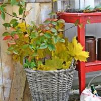 季節感を豊かに取り込む秋のハーヴェストディスプレイ♪