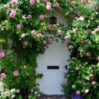小さな庭もとびきりおしゃれ☆イングリッシュガーデンの作り方