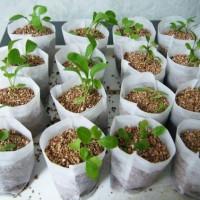 じつはとっても簡単なんです!野菜の水耕栽培の自作方法をご紹介☆