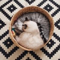 猫のいる暮らしをおしゃれに快適に!猫も喜ぶDIYアイデア集☆