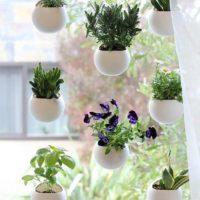 観葉植物をもっと楽しもう。定番だけじゃない、いろんなものが植木鉢に☆