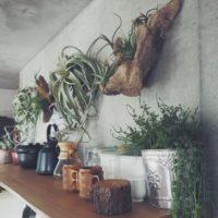 流木を使ったDIYでお部屋をお洒落に印象付けるアイデア特集☆