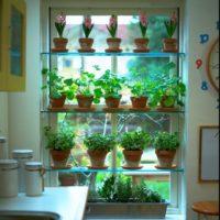 お部屋のインテリアにも最適♪キッチンハーブを育てて可愛く飾れるアイデア♪