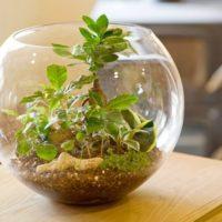 お家の中に小宇宙を♪テラリウムで暮らしに自然を感じよう!