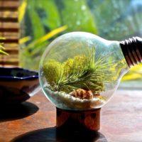 癒しの電球テラリウム特集☆電球の中に広がる小さな緑の神秘的な世界!
