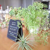 小さくて繊細なたくさんの葉に癒される♡可愛らしい「アジアンタム」を取り入れたコーデ集