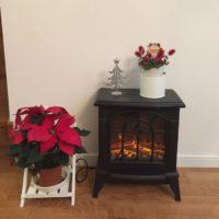 クリスマスにぴったり!鮮やかな赤が美しいポインセチアをお部屋に飾ろう