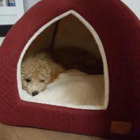 ペットと一緒に暮らすなら☆ドッグ&キャットベッドにもこだわってみませんか?