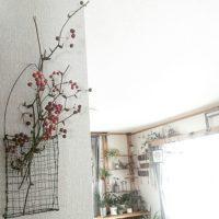 素朴感やナチュラル感が素敵☆赤い実が特徴の「サンキライ」を飾ろう♪