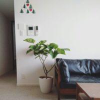 ハート型の葉がキュート♡ウンベラータを育ててお部屋に置いてみよう!