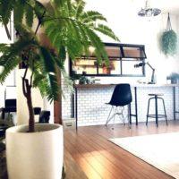 最近話題の観葉植物♡エバーフレッシュで、さわやか空間を演出しよう♪
