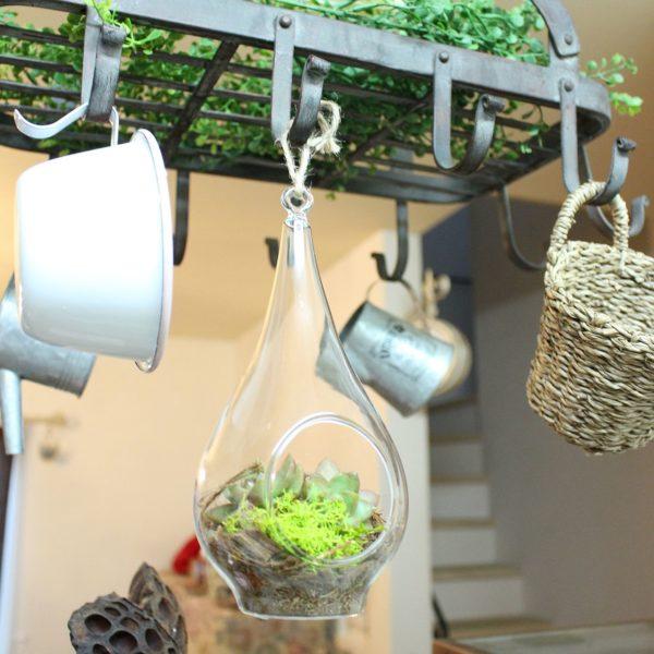 ガラスのハンギングプランターに多肉植物を入れたアイデア。これなら飾る場所を選ばないので嬉しいですよね♪