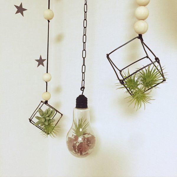 サイコロ状のワイヤークラフトを吊るして、土がいらない植物エアープランツを飾りましょう♪素敵なオブジェが簡単に出来上がりです♪