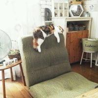 お気に入りの座椅子を見つけてリラックスしよう!心地よさを試してみて♪