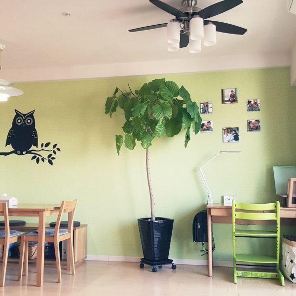 アクセントクロスと同じ色調の学習椅子に、ダイニングテーブルと似た雰囲気の学習机。調和のとれた家具の間に観葉植物でさりげなくスペースを切り替えて。