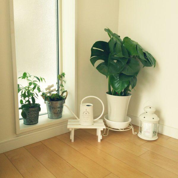 白い花台、水差し、フラワーポット、水受け皿に白いランタンも一緒に置いて一味プラス。ランタンは灯すだけじゃなく、収納にも使えます♪