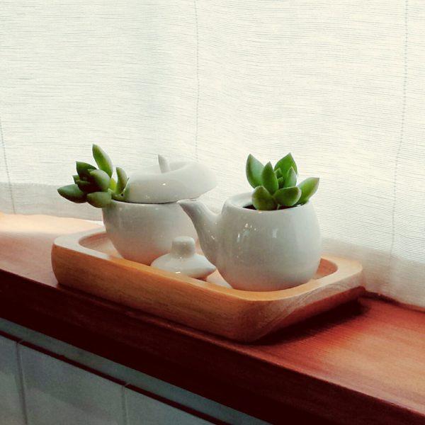 植物だけでなく器にこだわっても楽しいですね。お互いの雰囲気がマッチしたナチュラルで可愛らしい組み合わせですね。