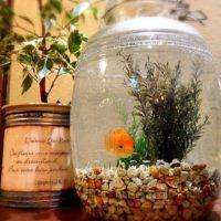 金魚鉢のある風景♪金魚と共に快適な暮らしを送りませんか?