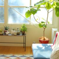 鉢や置き場所を工夫してオシャレ見え♡観葉植物をもっと素敵に飾ろう!