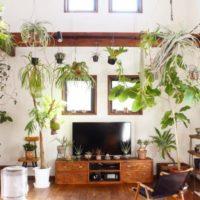暮らしの中に自然を取り入れたい方に。インテリアに取り入れたいおすすめ観葉植物10選