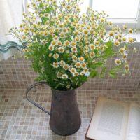 お家にお花を生けてみませんか?♡お部屋を一気に華やかにしてくれる秘訣♪
