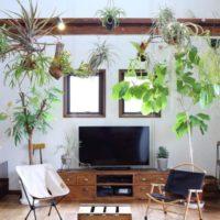 グリーンインテリアのある暮らしを楽しむ5つの方法☆