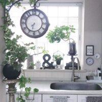 インドアガーデニングに挑戦!ガーデンインテリアのポイントをご紹介します