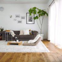 育てやすい観葉植物!ウンベラータを飾ってお部屋に明るさをプラス♡