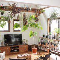 お部屋に緑のある暮らし☆自然に癒される素敵なお部屋16選♪
