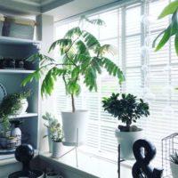 グリーンを取り入れた素敵なお部屋20選♪存在感あるグリーンからワンポイントまでオシャレな空間づくり!