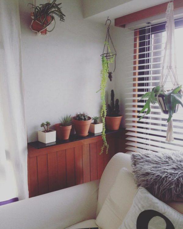 観葉植物を飾る10