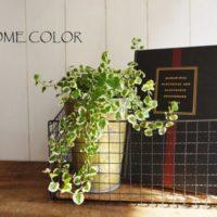 簡単DIYでお部屋をオシャレに演出♡ダイソーアイテムでグリーンを格上げ!