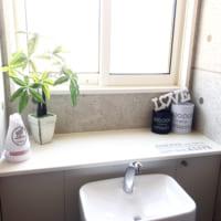 トイレにおすすめの観葉植物9選&インテリア実例集☆癒やしの空間に大変身♡