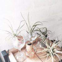 暮らしの中にナチュラルな空気を感じたい♪魅力的な観葉植物のレイアウト集