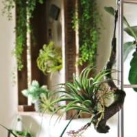 グリーンインテリアのDIY&アレンジ実例集!フェイクグリーンから多肉植物までをご紹介♪