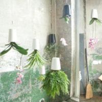 見た目も鮮やか☆お部屋に観葉植物を取り入れてステキなエコ空間を!