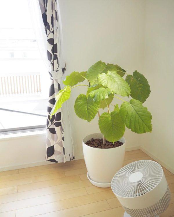 大きい観葉植物1